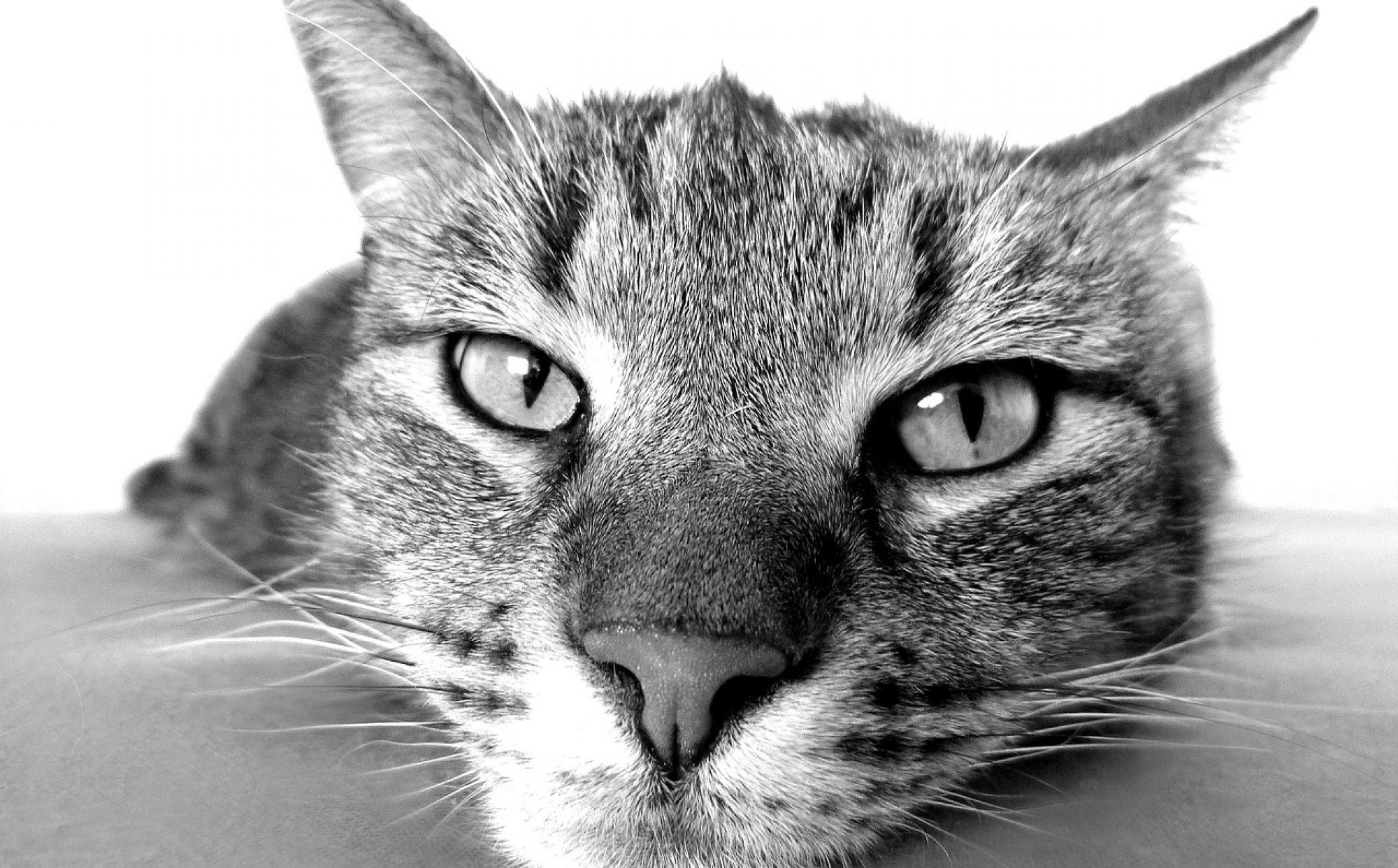 ネコにもわかるIT入門